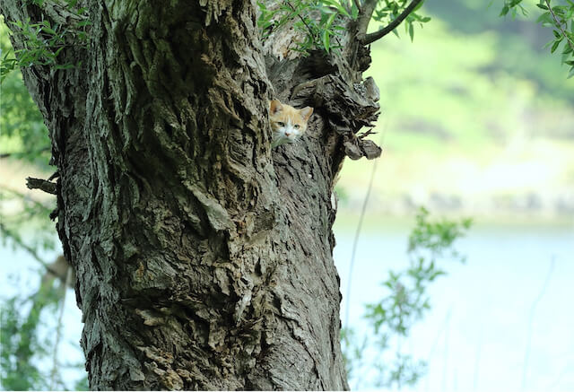 木の陰から覗く地域猫 by 亀井拓也