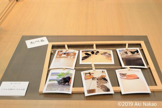 写真展「ねこめせん3」の展示作品 by nanonya.Aki(なのにゃーあき)