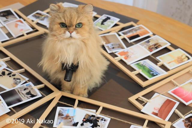 広報係の猫「にゃんちー」