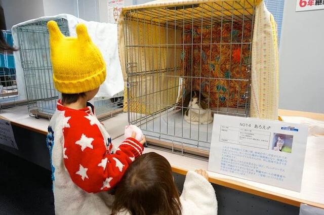 ちよだ猫まつりの保護猫譲渡会イメージ