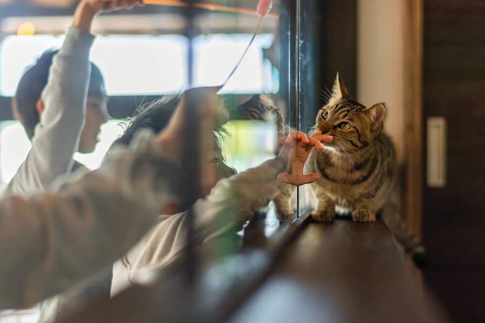 保護猫と触れ合う子どもたち by Catton(キャットン)の中にある保護猫譲渡センター