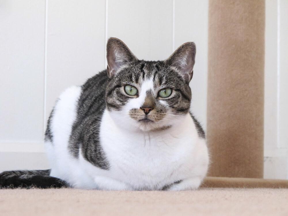 ディスカバリーチャンネルのYouTube猫の日企画