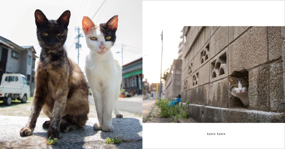 ヒミツのヒミツの猫集会のサンプル写真