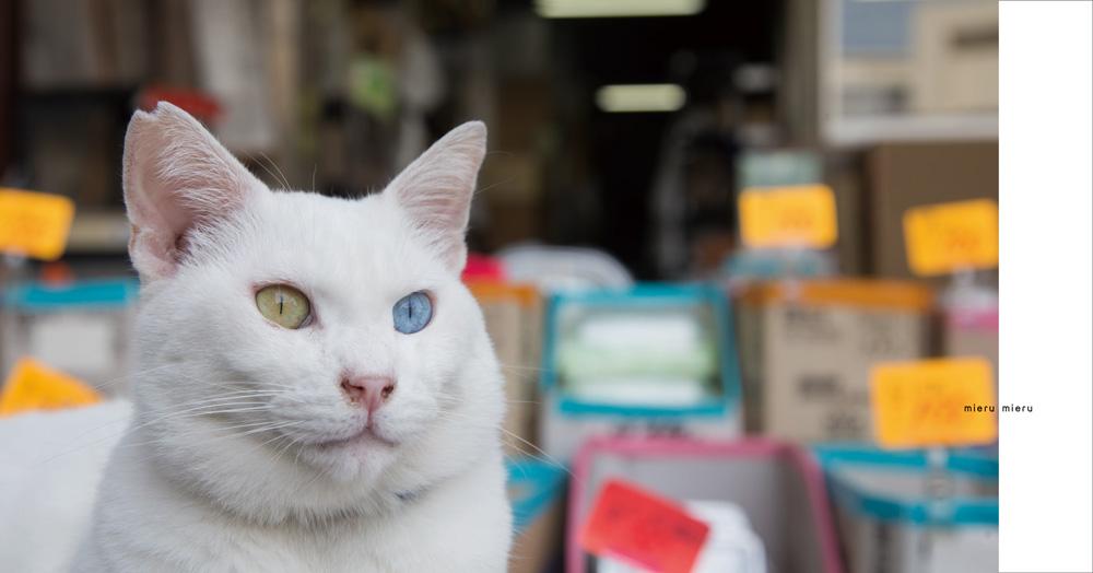 オッドアイの猫 by ヒミツのヒミツの猫集会