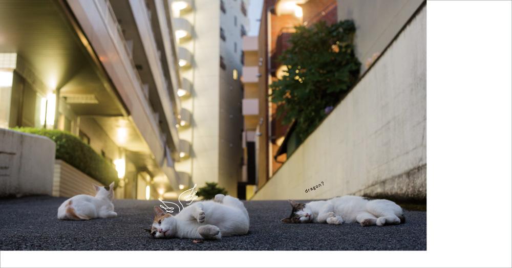 住宅の路地裏で猫の集会 by ヒミツのヒミツの猫集会