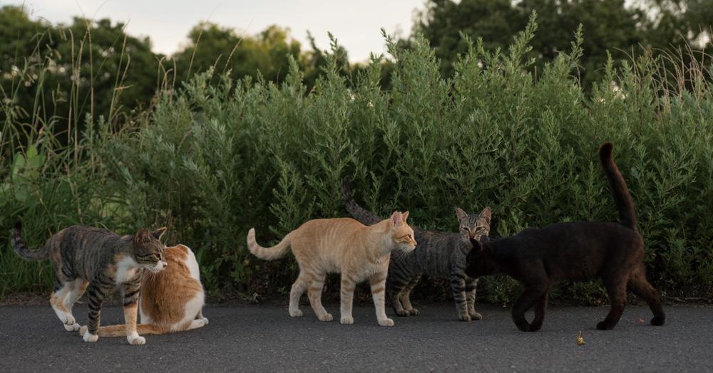 草むらで行われている猫の集会 by ヒミツのヒミツの猫集会