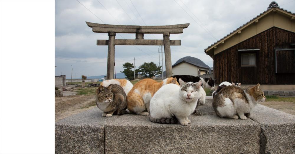 猫が密集して集会 by ヒミツのヒミツの猫集会