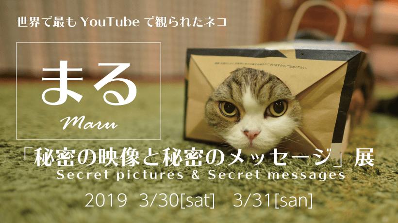 猫「まる」の写真や映像などを展示する「秘密の映像と秘密のメッセージ展」のメインビジュアル