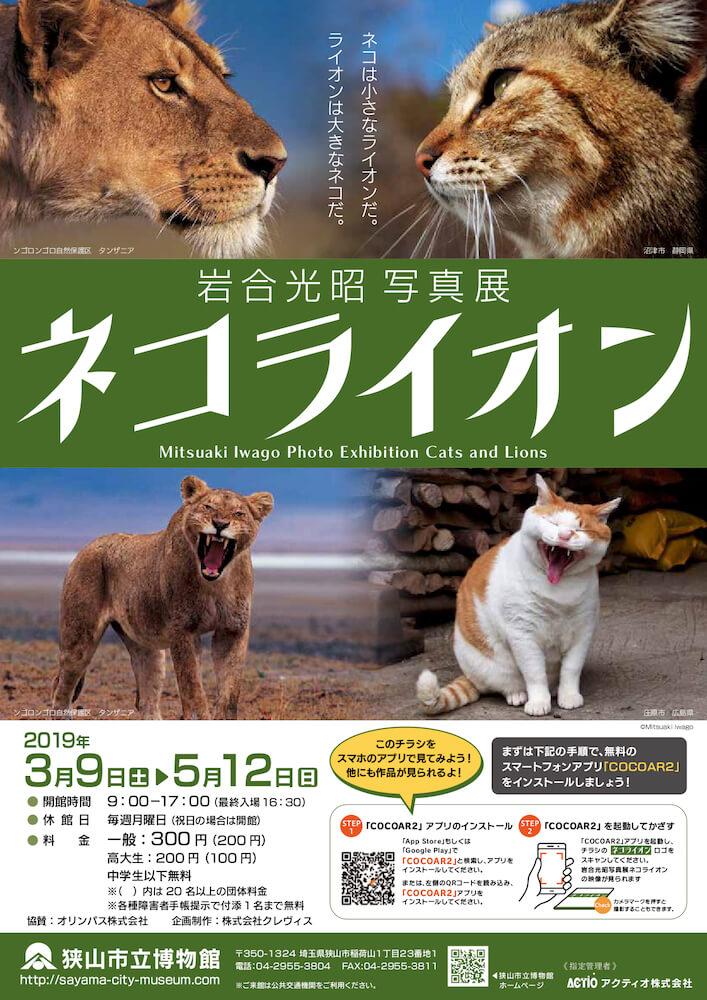 狭山市立博物館で開催中の岩合光昭写真展「ネコライオン」メインビジュアル