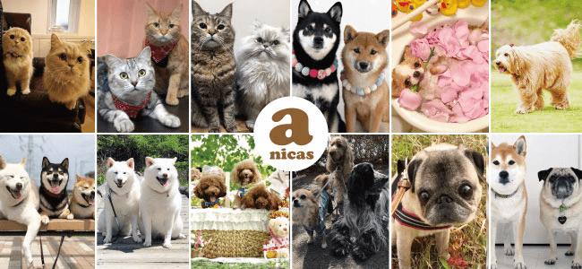 ペットタレントプロダクションのanicas(アニキャス)によるタレント猫&タレント犬に会えるトークショー