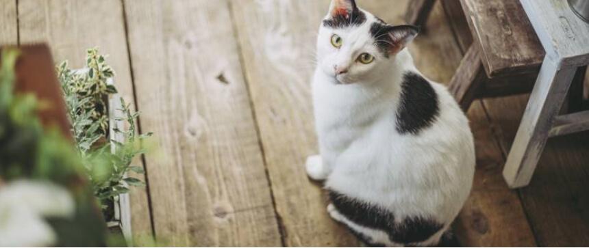 アイリスペットどっとコムの猫の国勢調査