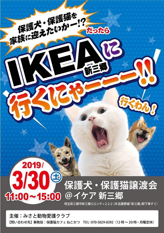 「第3回 保護猫&保護犬の譲渡会 in IKEA 新三郷」メインビジュアル