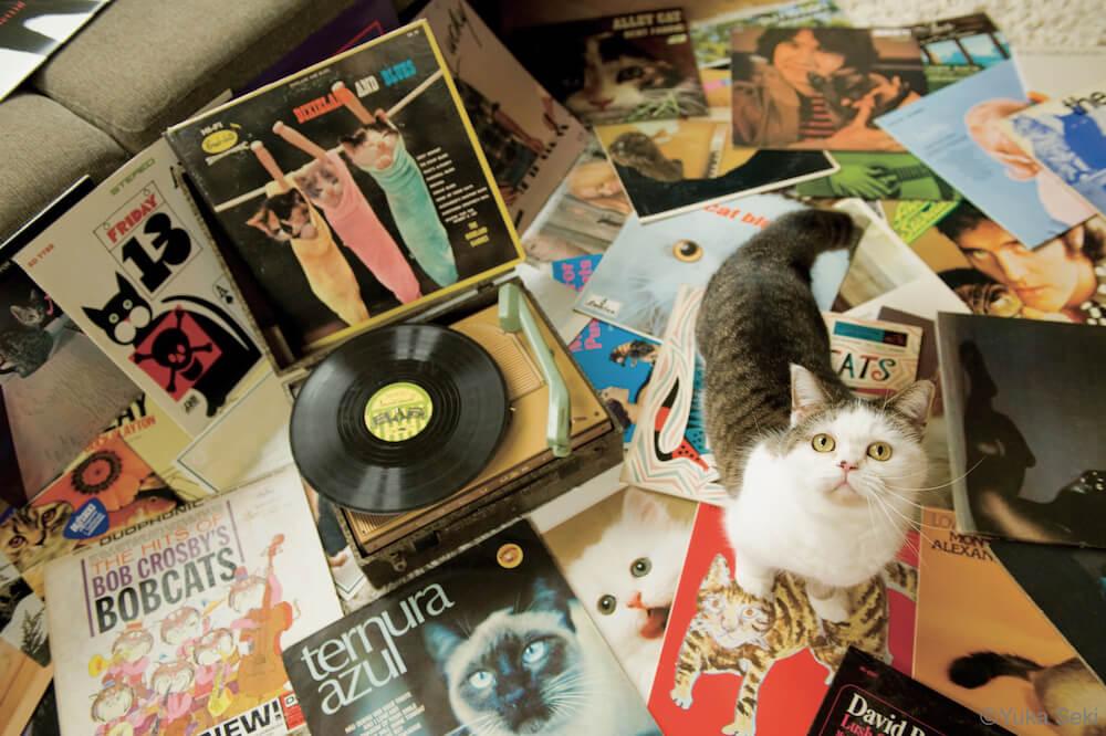 上を見上げる猫の写真 by 関由香
