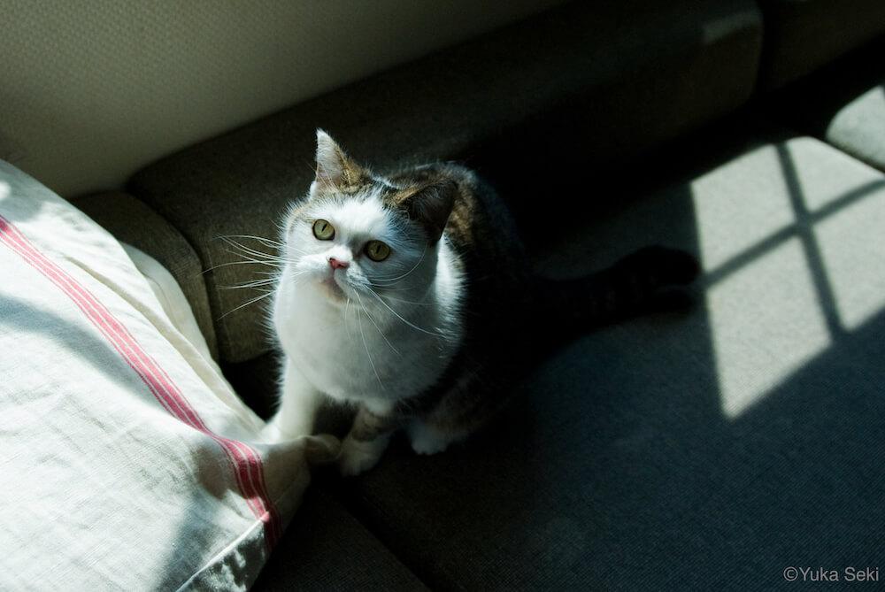 タレント猫の写真 by 関由香