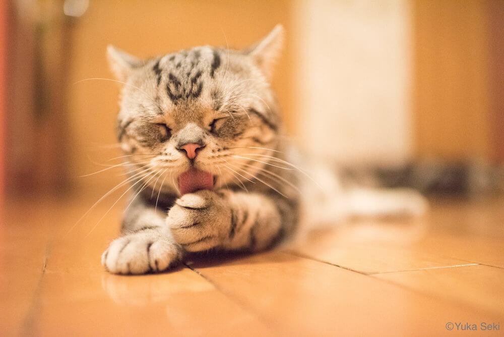 手を毛づくろいする猫の写真 by 関由香