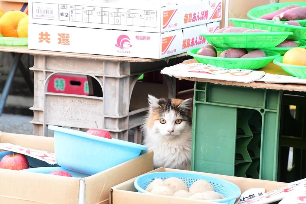 朝市で農産物の物陰からひょっこり覗く猫 by ひょっこりdeにっこり賞受賞作品