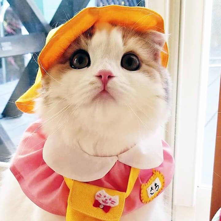 幼稚園生のコスプレをした猫 by幸ちゃん/@yoshi_u_rara