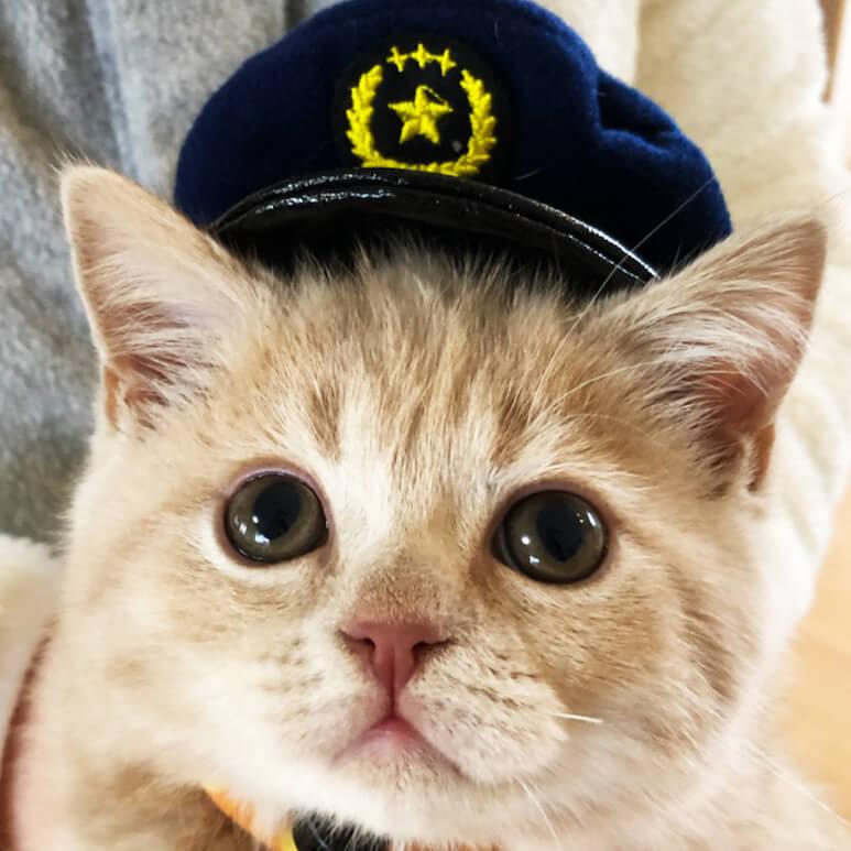 お巡りさんのコスプレをした猫 byとらじちゃん/@toraji11