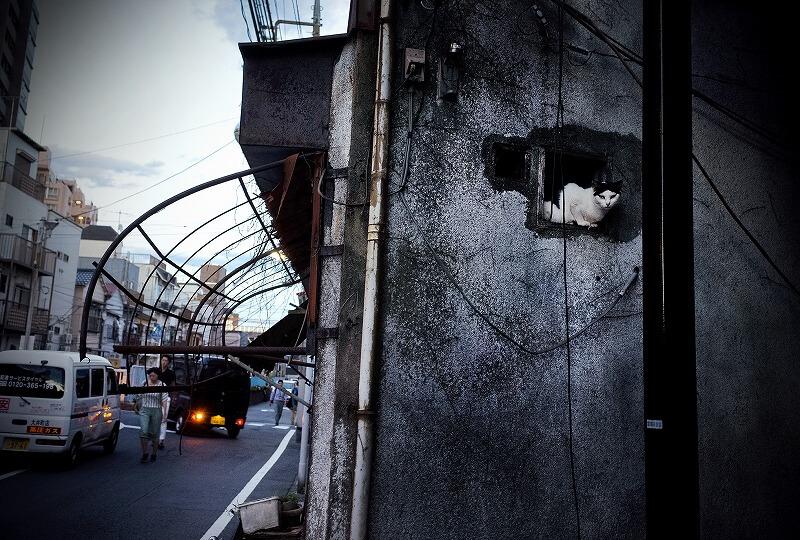 廃墟の崩れた壁から覗く猫の写真 by池口正和