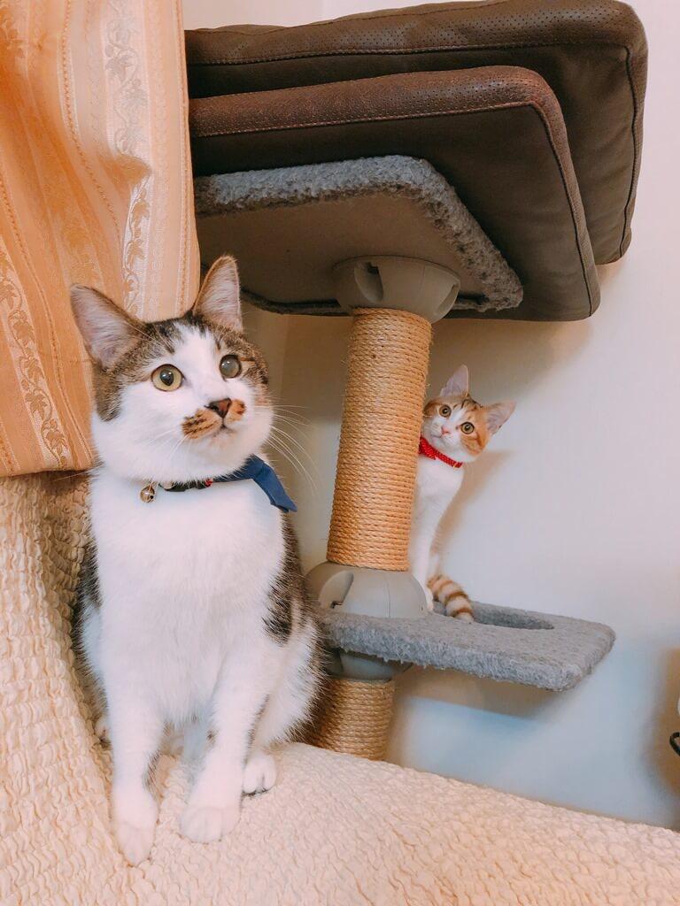 キャットタワーの支柱の陰からひょっこり覗く猫 by ひょっこりdeにっこり賞受賞作品