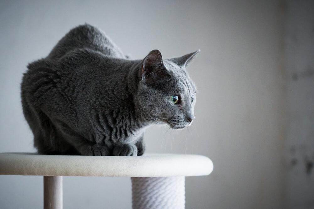 KARIMOKU CAT TREEのてっぺんでくつろぐ猫