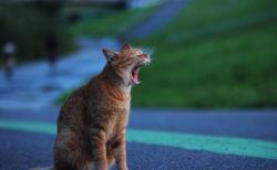 写真家グループ「東京猫色」の写真展がGWに開催、今を生きる野良猫たちの作品を展示