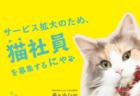 猫のお世話係を探せる「ニャッチング」が全国展開を開始、猫社員も募集中ニャ