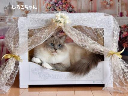 愛猫がメルヘンチックなお姫様を味わえる♪ 猫用の天蓋ベッド「ニャンメルベッド」