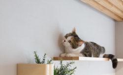 獣医師監修、猫仕様のリノベーション物件がついに完成!気になる内部を大公開