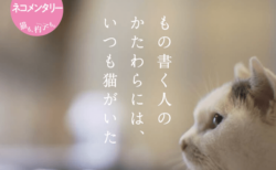 角田光代ら6名の猫好き作家の日常を収録!NHKの人気番組「ネコメンタリー」が書籍化