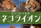 猫と百獣の王が共演、岩合光昭写真展「ネコライオン」埼玉・狭山市立博物館で開催中