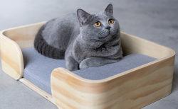 真っ白な氷雪ハウス型の猫トイレも当たる!猫とインテリアの写真投稿キャンペーンが開催中