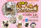世界中の珍しい猫と触れ合える「世界のにゃんこ展」今年も富山で開催