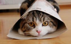 YouTubeで最も見られたギネス猫・まるの魅力を公開する「秘密の映像と秘密のメッセージ展」