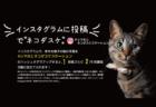 インスタに1回投稿するだけで2円を寄付、猫に優しいキャンペーンが4/30まで開催中