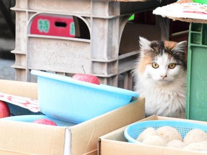 3,000点のネコ写真から「ねこのひょっこり展」大賞作品が発表!3/26まで展示中