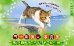 五十嵐健太写真展~飛び猫・フクとマリモ・ねこ禅~、兵庫県朝来市でGWまで開催中