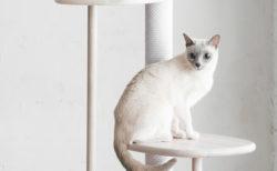 カリモクが猫用の木製家具ブランド「KARIMOKU CAT」を発表!第1弾はキャットツリー