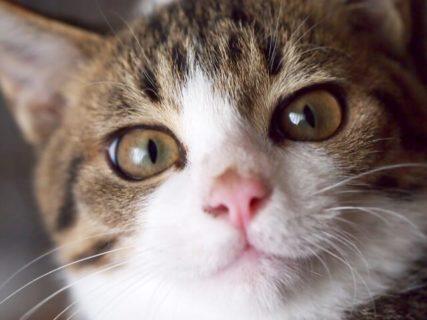 フォスターアカデミー、保護猫を預るのに必要な知識や心得を学べる「猫コース6期」の受講者を募集中