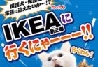 今年もイケアに犬猫がやってくる!埼玉・新三郷で保護猫&保護犬の譲渡会が3/30に開催