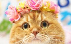 寝顔が可愛い猫のグランプリが決定&グッズ化「ねこにすと4 plus」が名古屋栄三越で開催