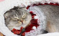 猫の寝顔写真と猫グッズが大集合!「ねこにすと展6」が新潟三越で開催中