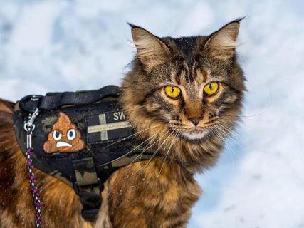 愛猫も特殊部隊メンバーに入隊ニャ!犬猫用の本格ミリタリーベストの最新モデルが登場