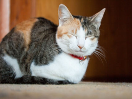 愛猫の写真を三越伊勢丹の希望店舗に展示してもらえる!ベストショット写真展が作品募集中
