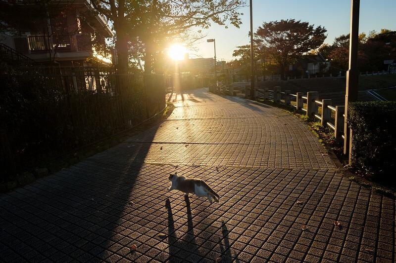 東京の道端を走る猫の写真 byNaoe Shimada