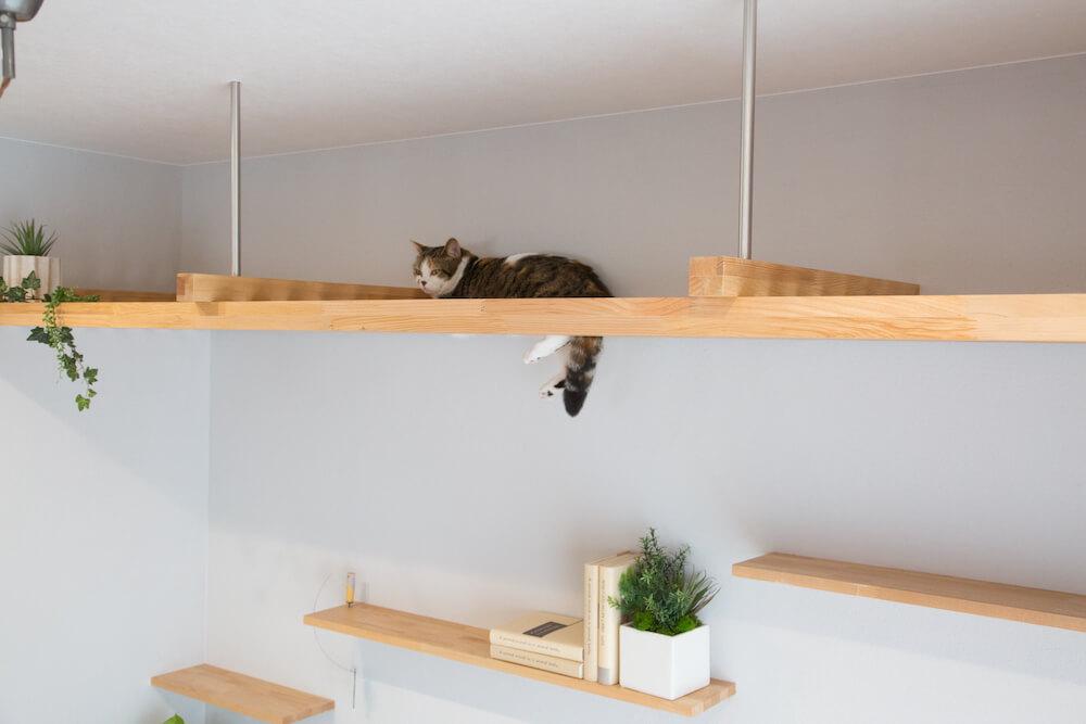 猫のための天井スペース「マイリノ・キャットルーフ」