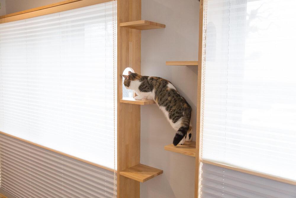 猫が壁と天井を自由に行き来できる「マイリノ・キャットステップ」