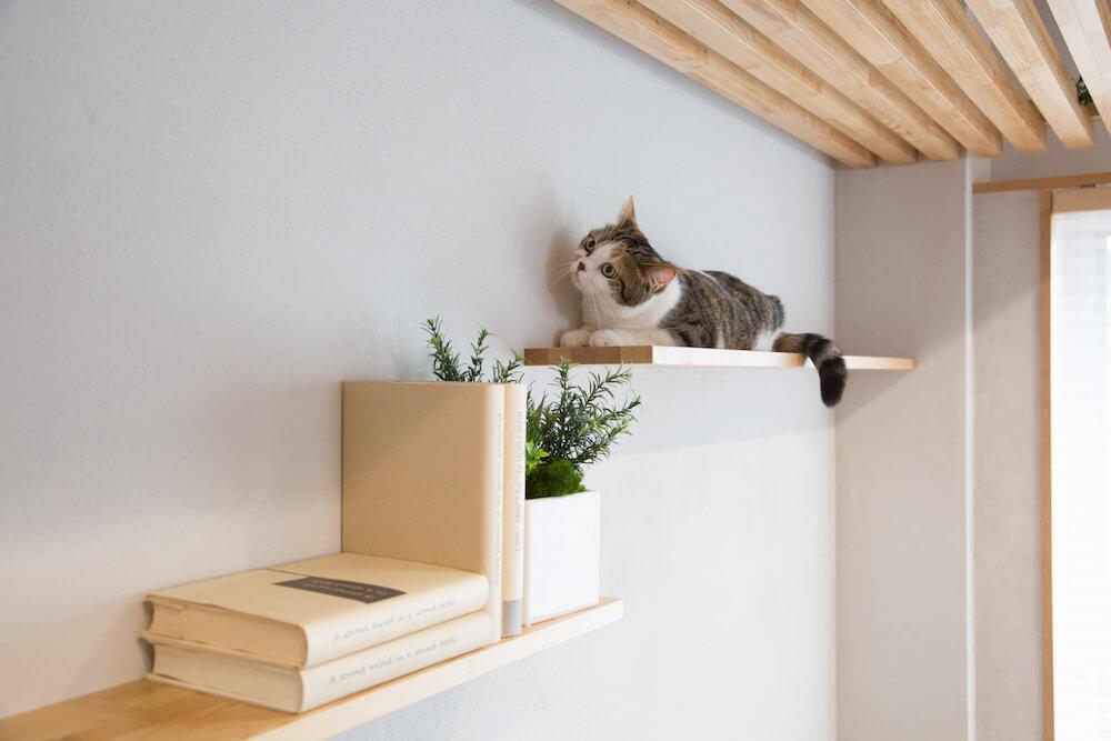 リビングの壁面イメージ by「マイリノペット for ねこ」