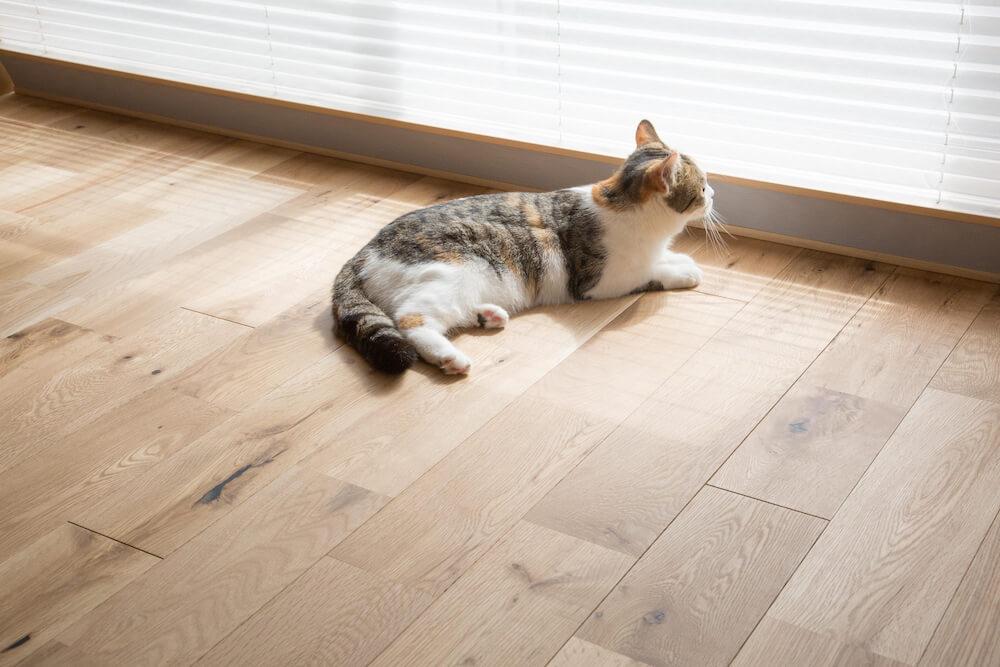 猫にとって足触りの良い無垢材の床 by「マイリノペット for ねこ」