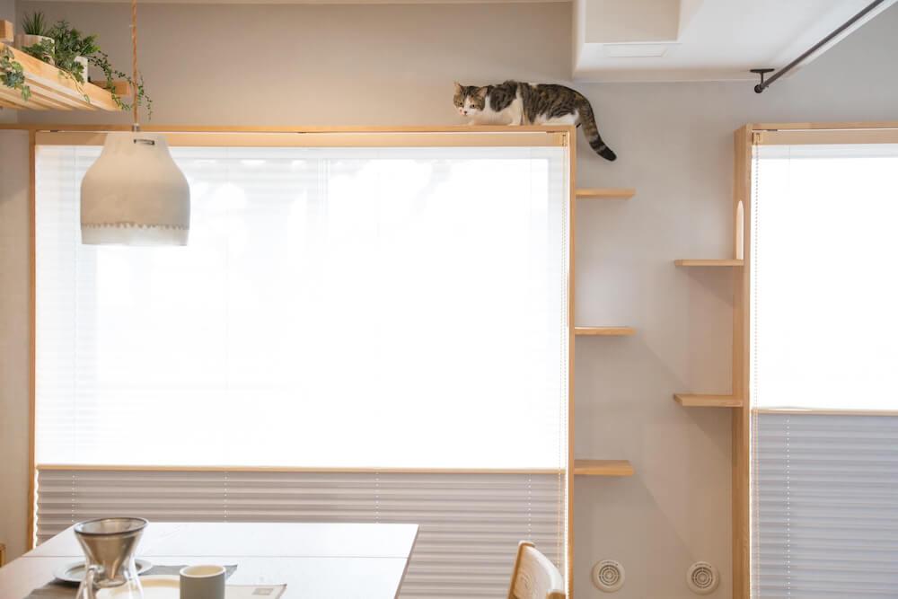 窓際にはプリーツスクリーンを設置 by「マイリノペット for ねこ」